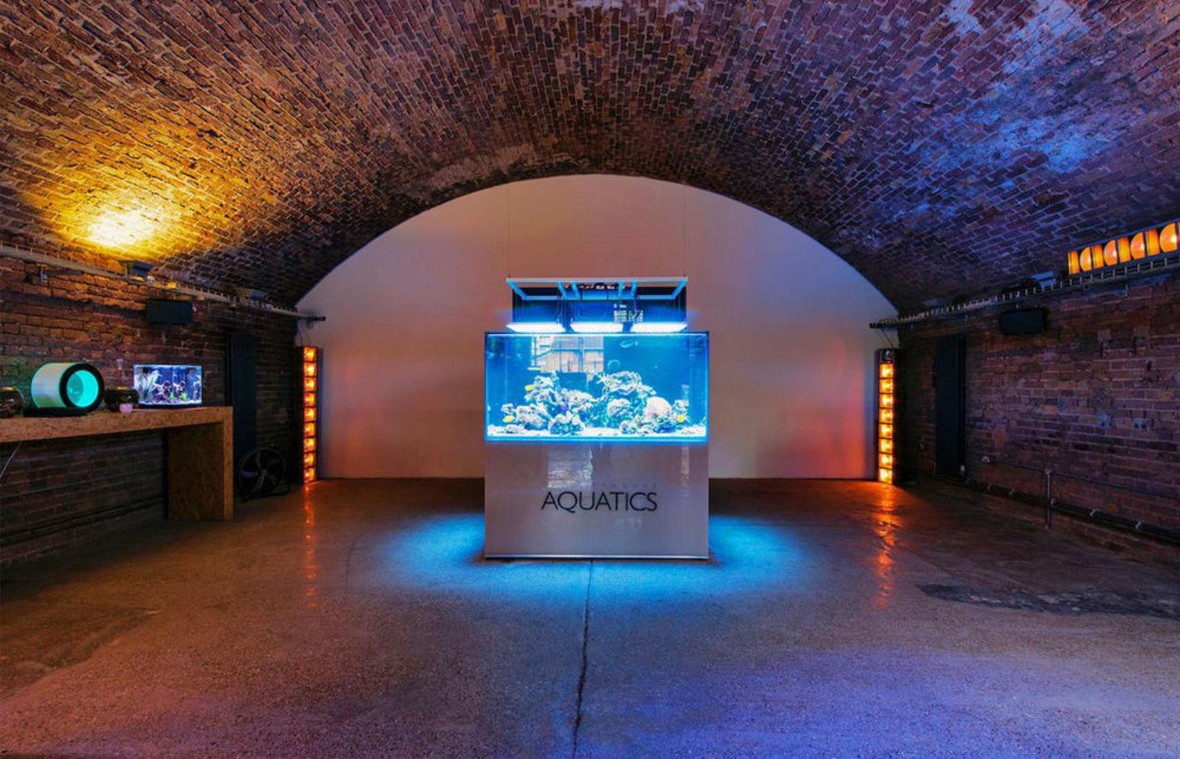 Showroom, Dalston Fish Tank