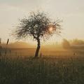 Small tree morning nature sunrise 163513