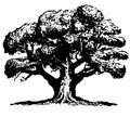 Small tree blackonwhite jpeg2