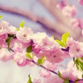 Small pink cute flowers desktop hd wallpapers wallpaper background floyd pretty cupcake pretty 1852764822